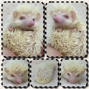 baby-albino